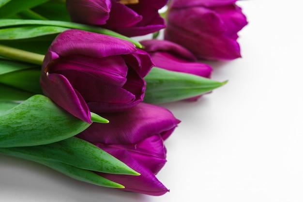 Свежие цветы тюльпана, изолированные на белом