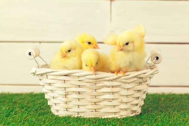 草の上の小さな鶏