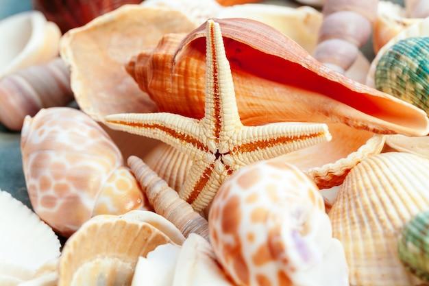 海の貝殻とヒトデのクローズアップ