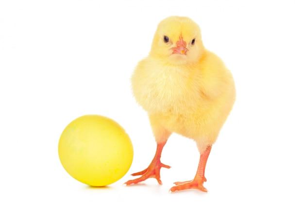 Пасхальное яйцо и милый маленький цыпленок