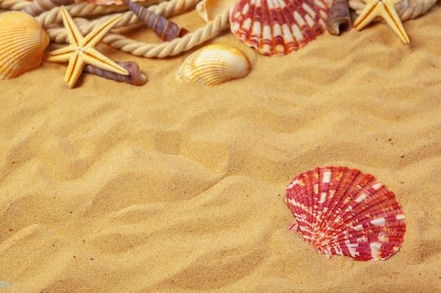 Ракушки на песке