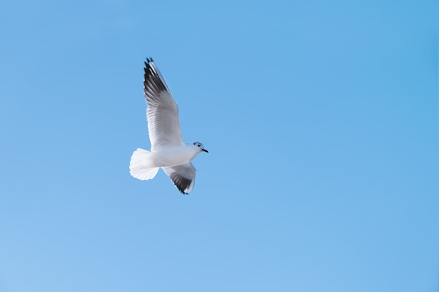 かもめ鳥が青い空を飛ぶ