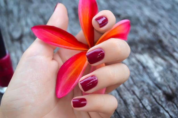 美しいマニキュアと女性の手でピンクのプルメリアの花