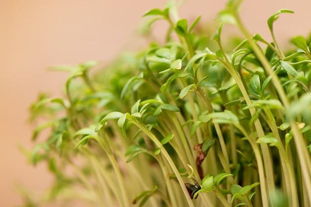 発芽穀物のクローズアップクレソンサラダは、濡れたリネンマットで育ちます。