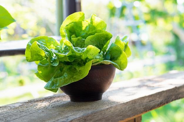春の庭で粘土ボウルに新鮮なレタス。健康的な食生活