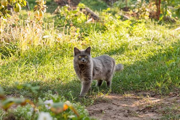 庭のかわいい灰色猫