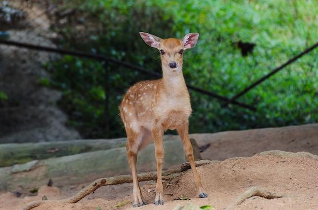 動物園の小さな鹿、クローズアップ