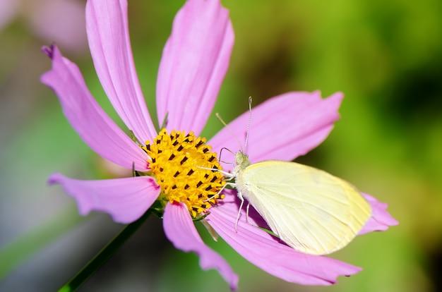 ピンクの花に小さな白い蝶