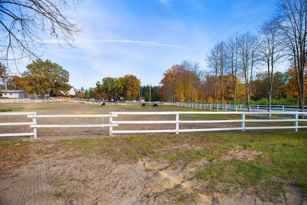 緑の野原に木製の白いフェンス。美しい青い空。馬が放牧されます。