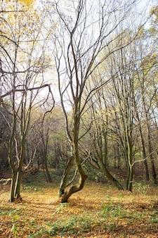 Красивый солнечный осенний пейзаж с опавшими сухими красными листьями, дорога через лес и желтые деревья