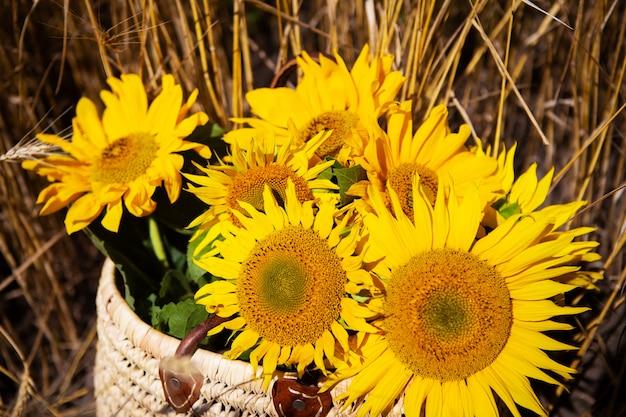 Букет подсолнухов лежит в соломенной сумке на большом пшеничном поле.