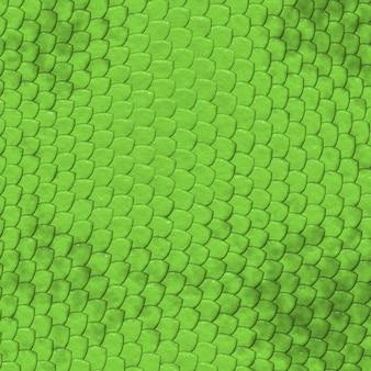 イグアナの肌の模様