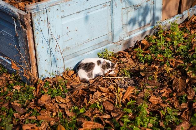 秋の落ち葉で寝ている猫