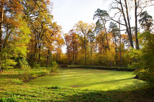 森の中の緑の沼。美しくて暖かい秋。