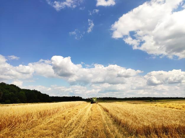 Современный комбайн, работающий на пшеничном поле, уборка урожая, на сельскохозяйственных угодьях