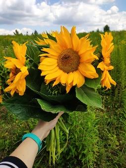 農業、屋外での収穫。青い空を背景のヒマワリのクローズアップ。女の子はひまわりの花束を保持しています。