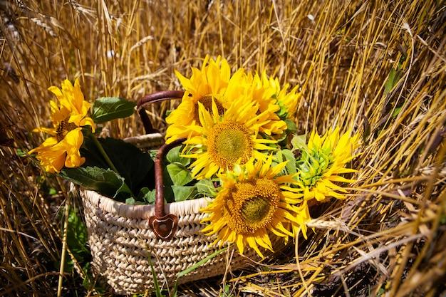 Букет подсолнухов лежит в соломенной сумке на большом пшеничном поле. крупный план.