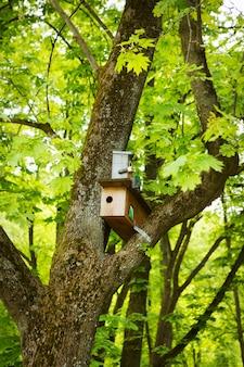 木の幹に巣箱と春の緑豊かな公園