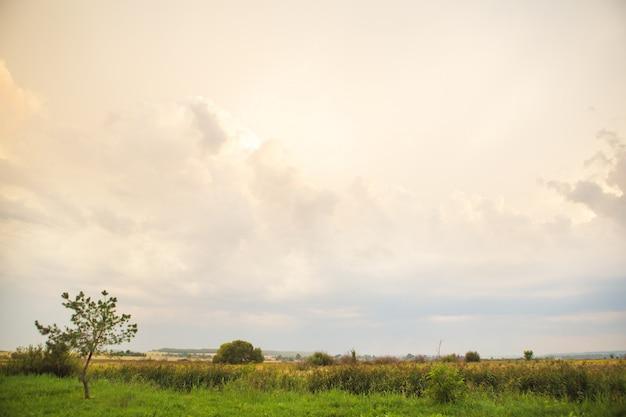 緑の野原と大きな白い雲、夏の日没