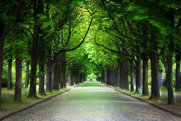 Проселочная дорога проходит через аллею деревьев