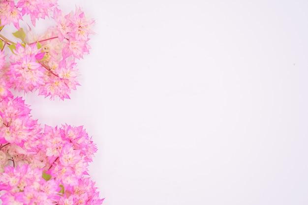 白い背景に、コピースペースに分離されたピンクのブーゲンビリアの花