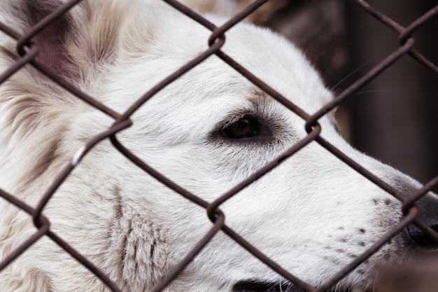 悲しい顔をしたケージ犬。放棄された動物の避難所の目で犬