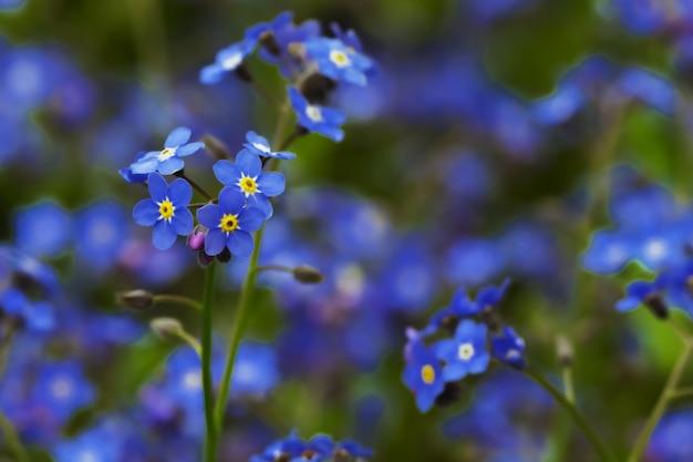 青い魅力的な小さな花
