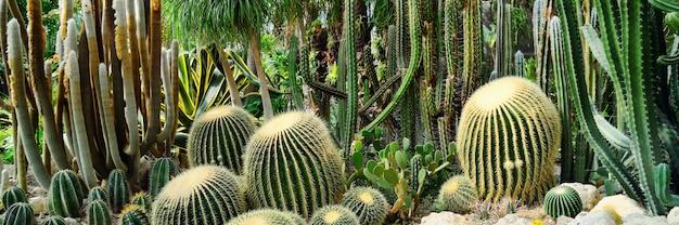 Панорама различных видов кактусов