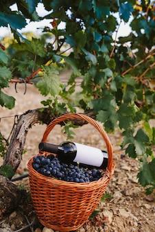 Корзина винограда с бутылкой вина в винограднике
