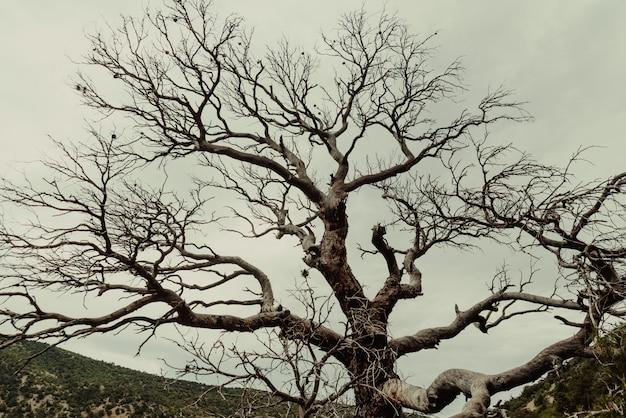 森の枯れ木