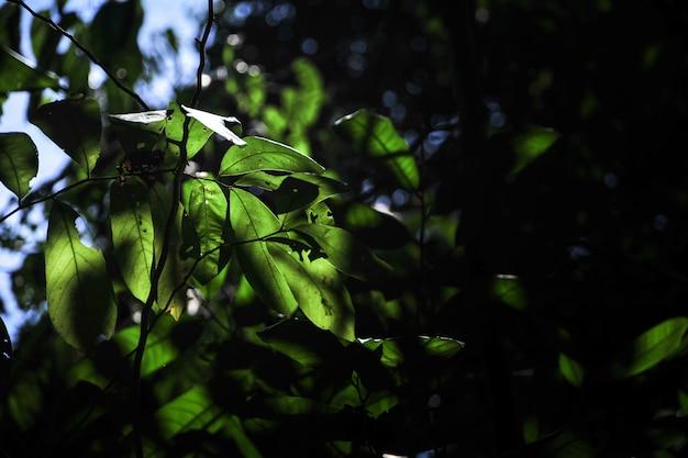朝の緑の葉と日光