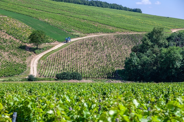 Летний виноградник живописный пейзаж