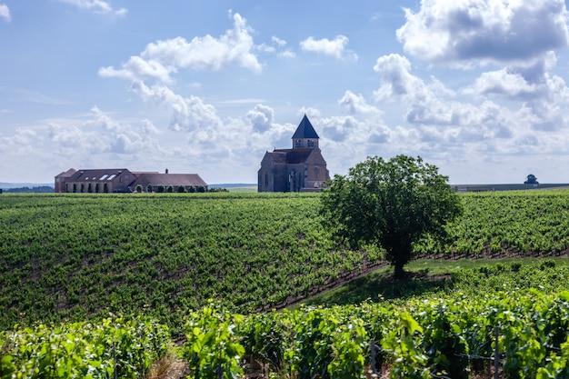 Ряды виноградников в солнечный день со старым домом