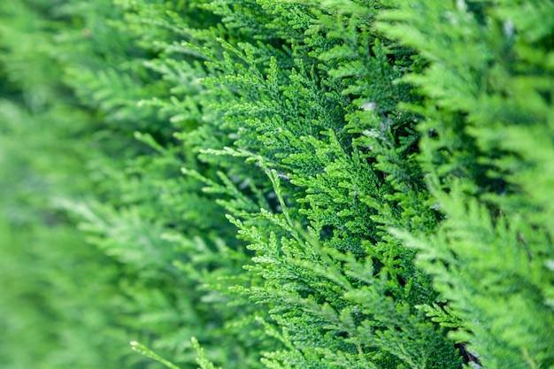 自然の緑の枝の壁