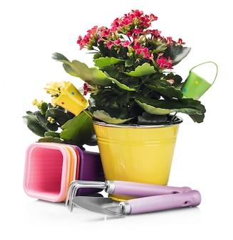 白で隔離の花と園芸工具