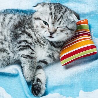 小さな枕で寝ている子猫