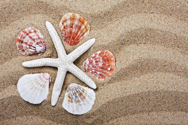 Снаряды на морском песке