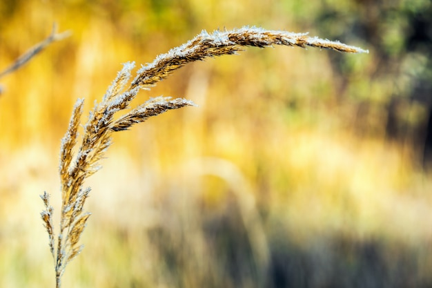 草は背景に氷の結晶で凍結されています