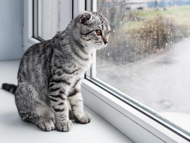 猫は窓辺に座っています