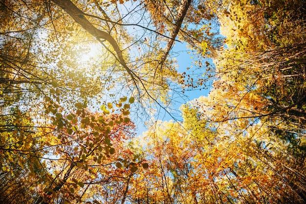秋の森の梢