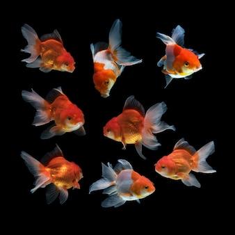 黒の背景に魚