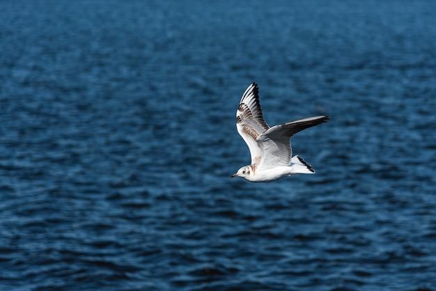 美しい青い空と海を飛ぶカモメ