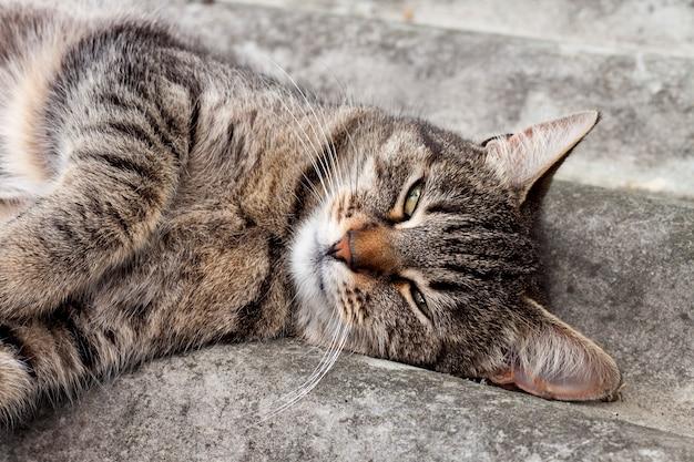 スレート屋根の上に横たわって休んでいるトラ猫