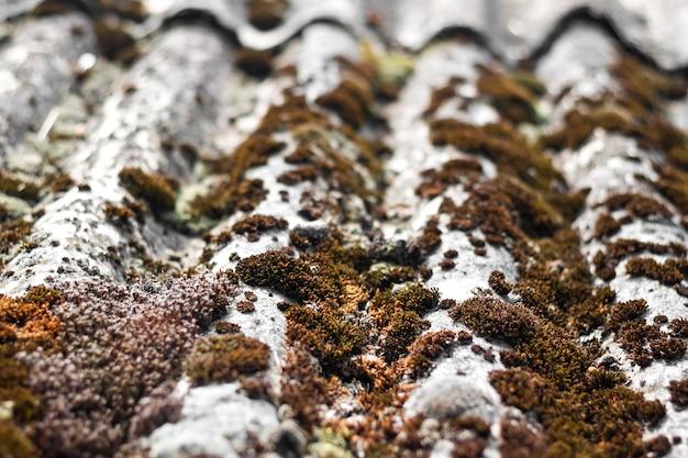 乾燥した苔と地衣類で覆われた古いスレート屋根のクローズアップ