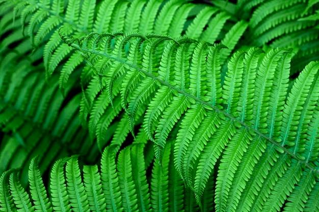 緑のシダの葉の自然な背景
