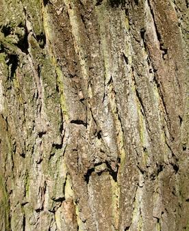 Кора дуба естественный фон
