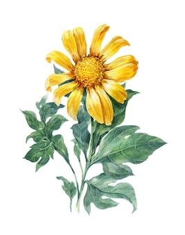 黄色、花、ひまわり、白の水彩イラスト絵画