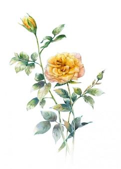 白地にバラの水彩画