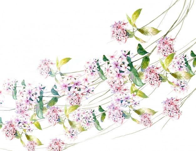 葉と花、白の水彩画