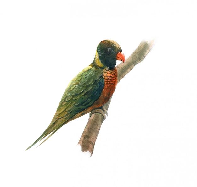 美しい鳥の水彩画